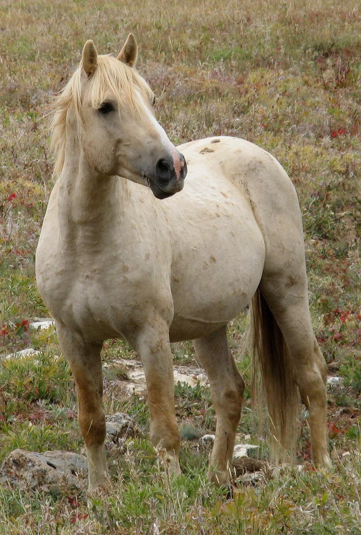 how to draw a wild mustang horse