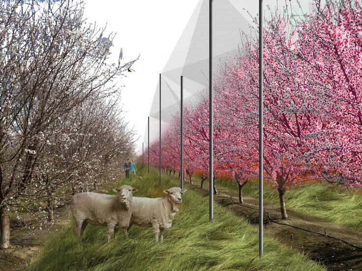Landscape Architecture, Productive Slaughter, Orchard Production and Frost Prevention, Rendering