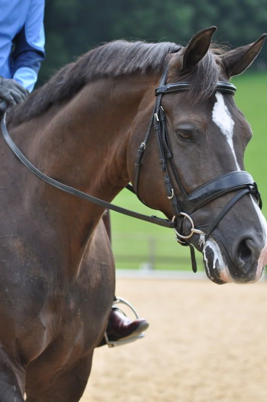 Valegro - one of the best horses in the world!