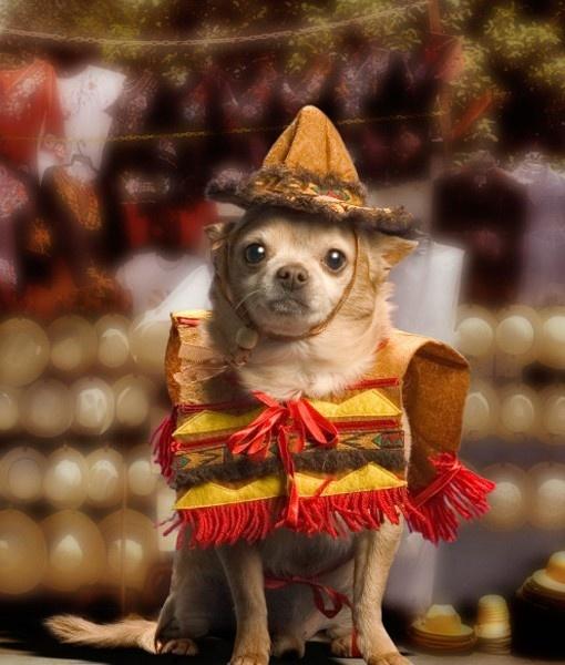 Happy Cinco De Mayo!!  He looks so much like my Papi....love this!