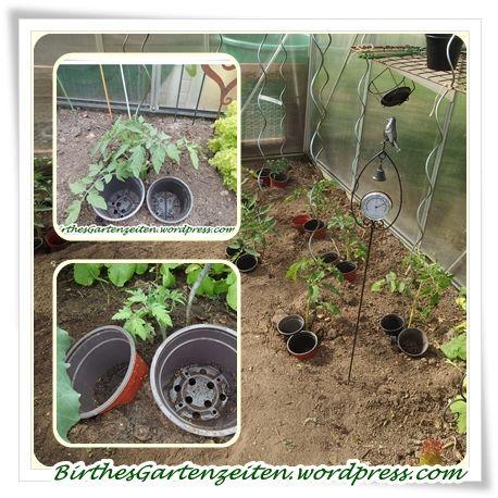 Popular  Tomaten Bew sserung u richtig gie en f r gesunde Pflanzen u