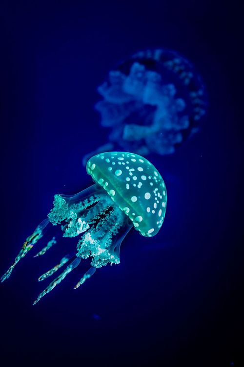http://atraversso.tumblr.com/post/102613642073/earthyday-bioluminescence-c-angelo-n Bioluminescence © Angelo N.