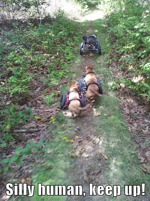 It's hard to keep up with the dogs from Eddie's Wheels in their dog wheelchairs