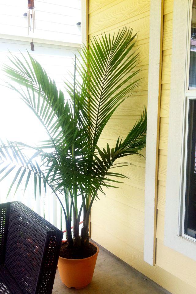 Palm Tree Back Patio Home Decor