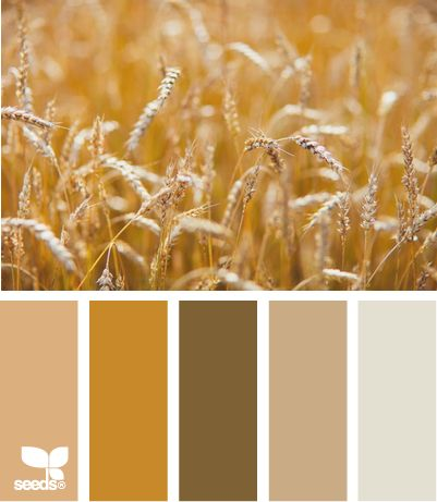 amber waves: Amber Waves, Design Seeds, Paintings Colors Combos Warm, Colors Palettes, Great Ideas, Waves Wheat Colors, Wheat Colors Schemes, Rustic Wedding, Honeycombs