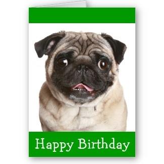 Pug Puppy Dog Birthday Card http://www.zazzle.com/cute_pug_puppy_dog_happy_birthday_greeting_card-137447471863929181?rf=238669615131463341