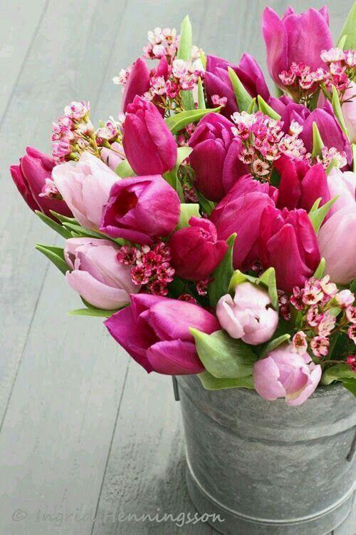 Tulpen in ijzeren emmer