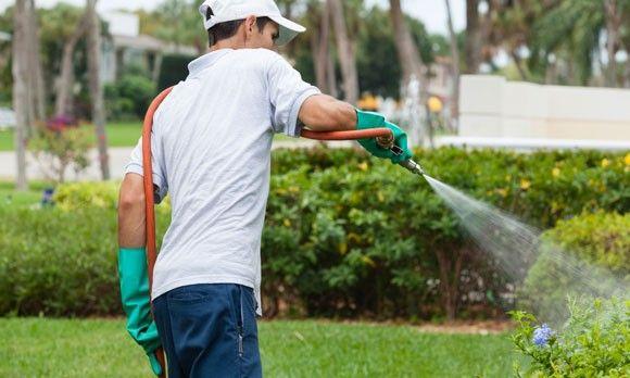 77 best Eco gardening images on Pinterest