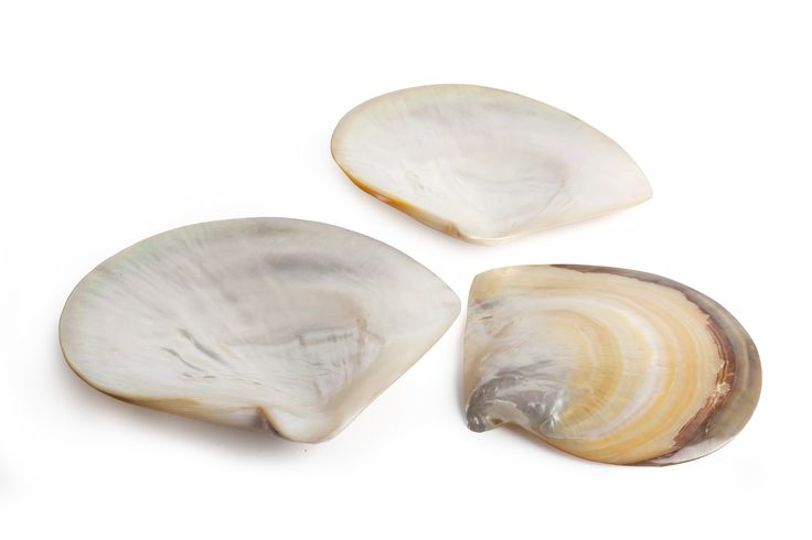 Vance Kitira set of 3 Mother of Pearl shells. Beautifully packaged as a gift and look great when displayed!