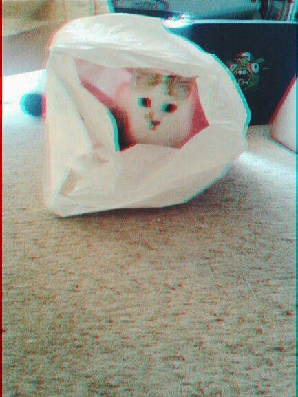 #glitch #cat #love #mystery #lovecats