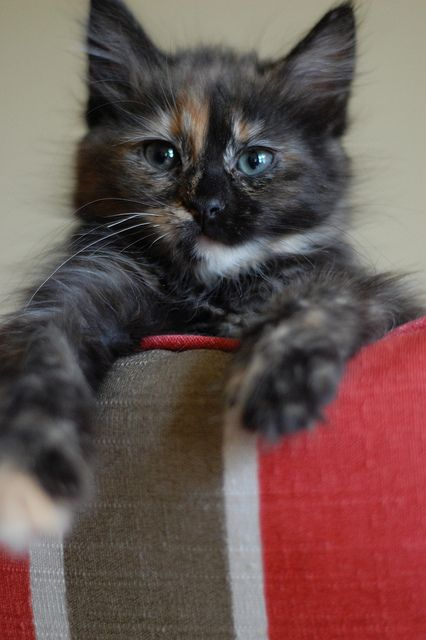 ~looks like my Magick when she was a wee kitteh~