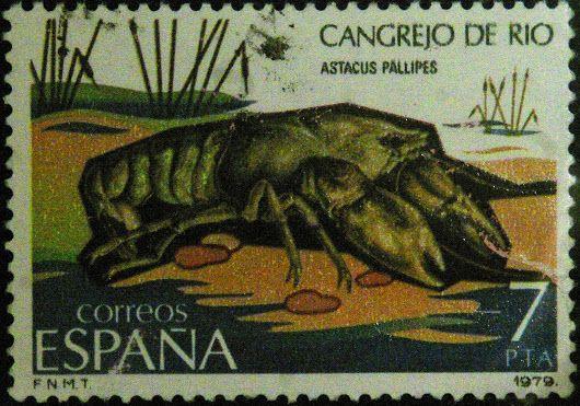 Austropotamobius pallipes - Cangrego de rio