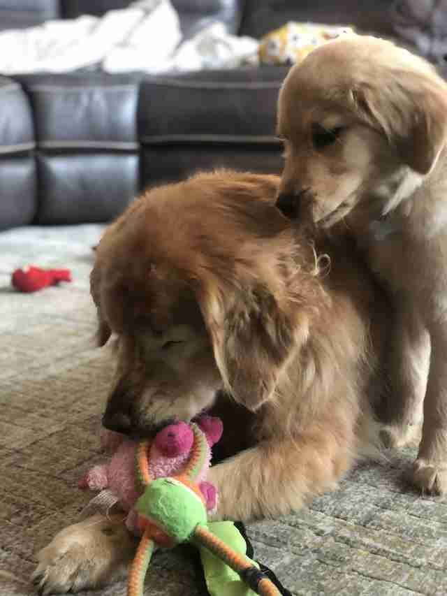 Blind Senior Dog Finds A Puppy Friend To Show Him The Way