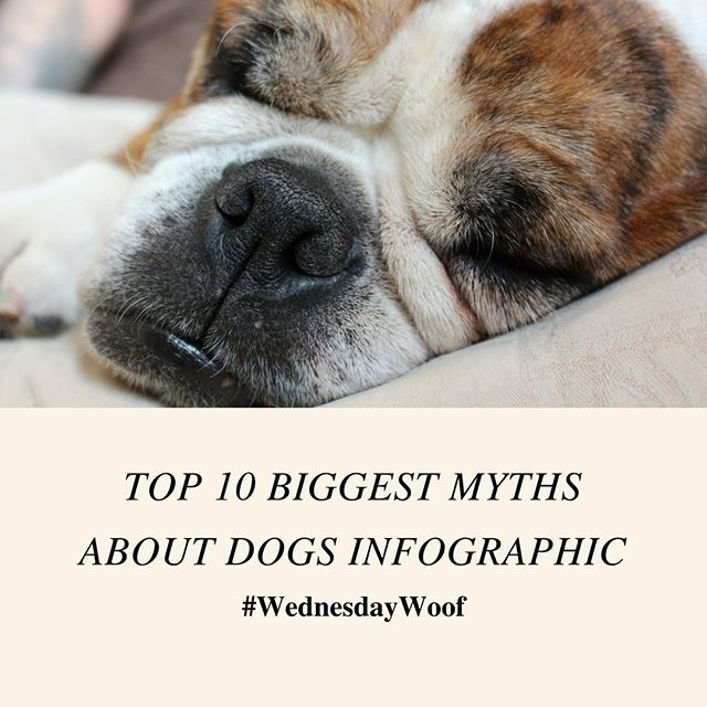 Wednesdaywoof Top 10 Biggest Myths About Dogs Infographic Here Are Those Myths In Text Format For Easy Copy Paste Lin Dog Infographic Dogs Dog Obedience