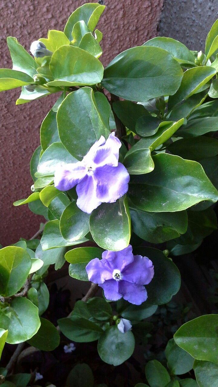 6f66d4c4fd669 Pin de Beatriz en flores