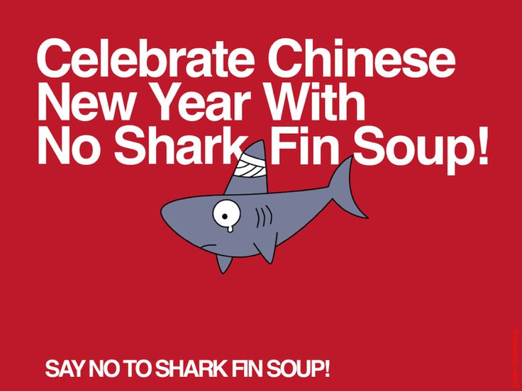 Say No To Shark Fin Soup!  GONG CI FA CAI Happy Chinese New Year 2016