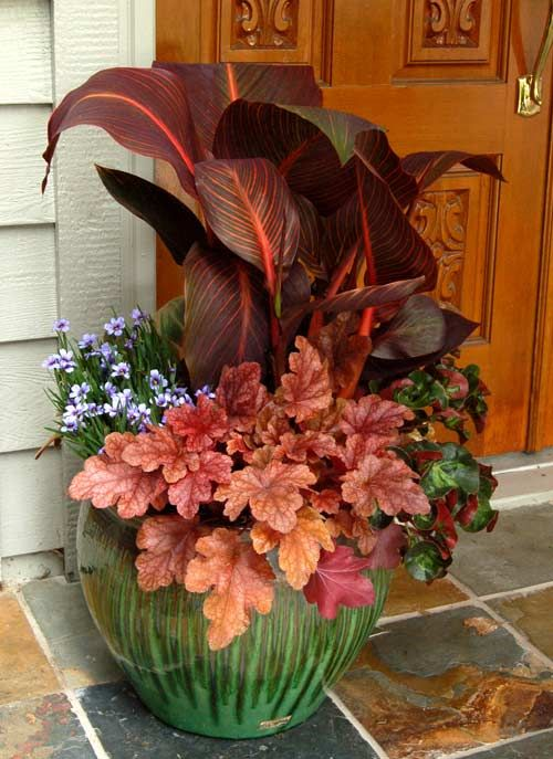 Sisyrinchium 'Devon Skies', Heuchera ' Peach Flambe' , Begonia 'Cathedral' by :Terra Nova Nurseries