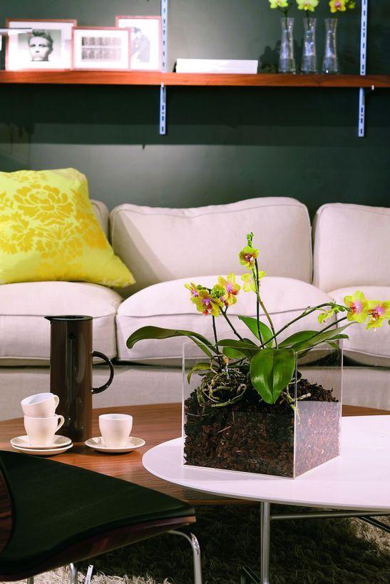 adelaparvu.com despre orhidea Phalenopsis Foto Floradania (6)