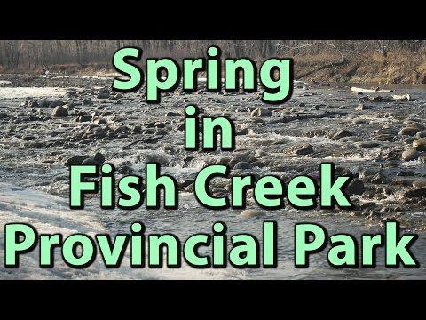 Spring at Fish Creek Provincial Park in Calgary 4K Video – Journey Alberta