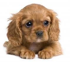 puppy - Google Search