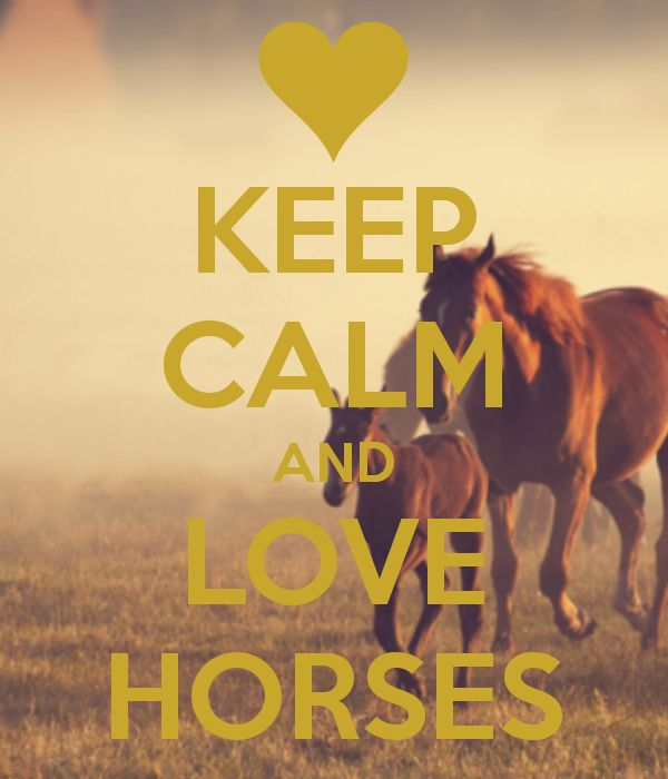 39 best Keep calm and love horses images on Pinterest