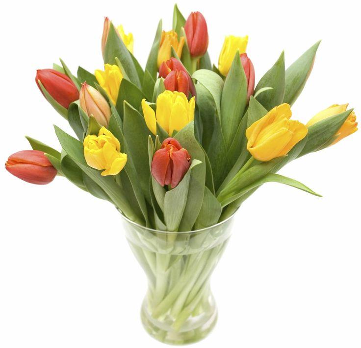 Tulipanes en dos tonos, consulta por disponibilidad de colores a elección, www.floreriasumonte.cl