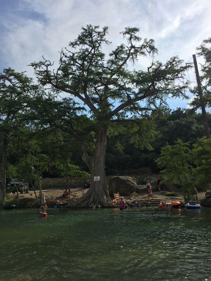 Sleeveless Top - Landa Park Trees by VIDA VIDA Free Shipping Professional QZiGFlQ8