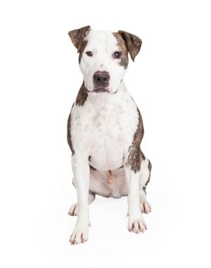 AnimalsSale.com is a classified of dogs, cats, animals, pets for sale, exotic animals, birds, fish. AnimalsSale.com a free animalssale classified in the USA, UK, Europe and Asia.