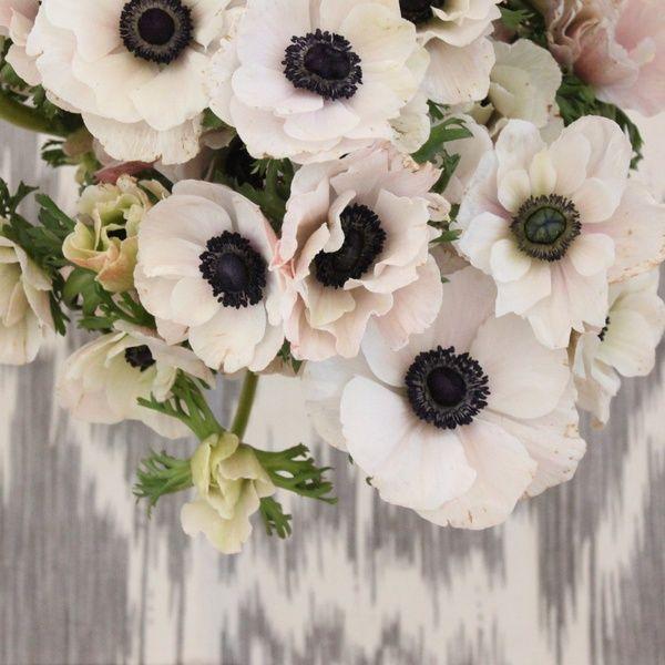 15 Most Beautiful Black Flowers: Best 10+ Anemones Ideas On Pinterest