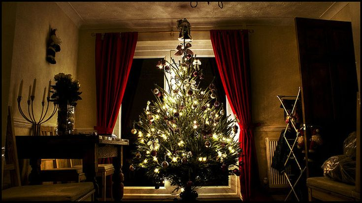 Por qué elegir árboles de Navidad naturales