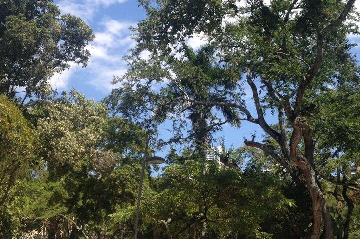 Espacios verdes \ Parques Urbanos