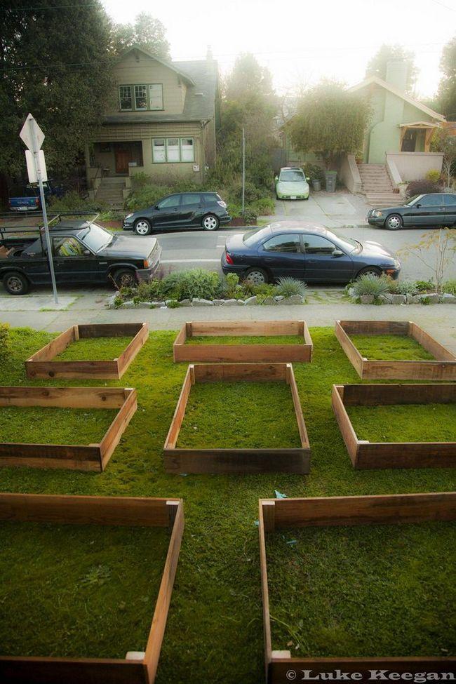 Horta no quintal (2)