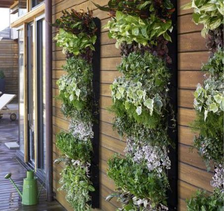 Vertical gardens - a very good idea for making use of vertical space on a tiny balcony