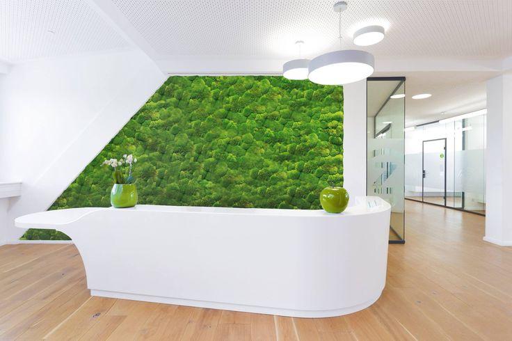 New Kugelmoos Begr nung Innenraum Gr ne Wand in einer Praxis greenwall vertikaler Garten Vertikale G rten Pinterest Green style Indoor and Walls