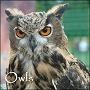 Owls  http://www.thewhitegoddess.co.uk/articles/mythology_folklore/index.asp#