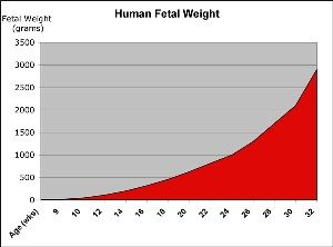 The  Best Fetal Growth Chart Ideas On   Pregnancy