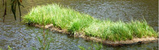Floating Wetlands, Floating Islands, Aqua Biofilter, Floating Reedbeds, Aquaponics Kitchen Garden, Biofilm, Floating Biofilter, Algal bloom, Aquaculture, Waste water treatment |