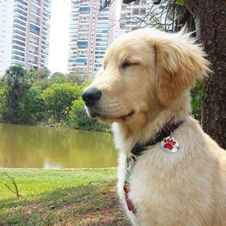 Quando ele fecha os olhos pra curtir o ventinho batendo na cara. | 30 imagens que todo dono de cachorro vai reconhecer