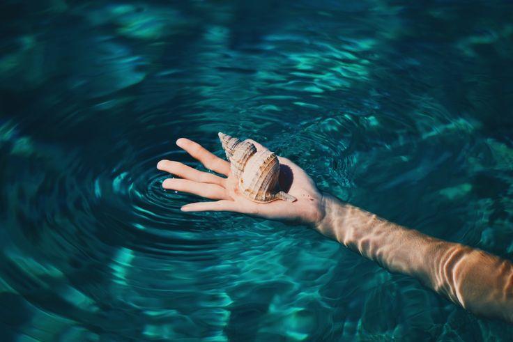 Shell, by Biel Morro | Unsplash