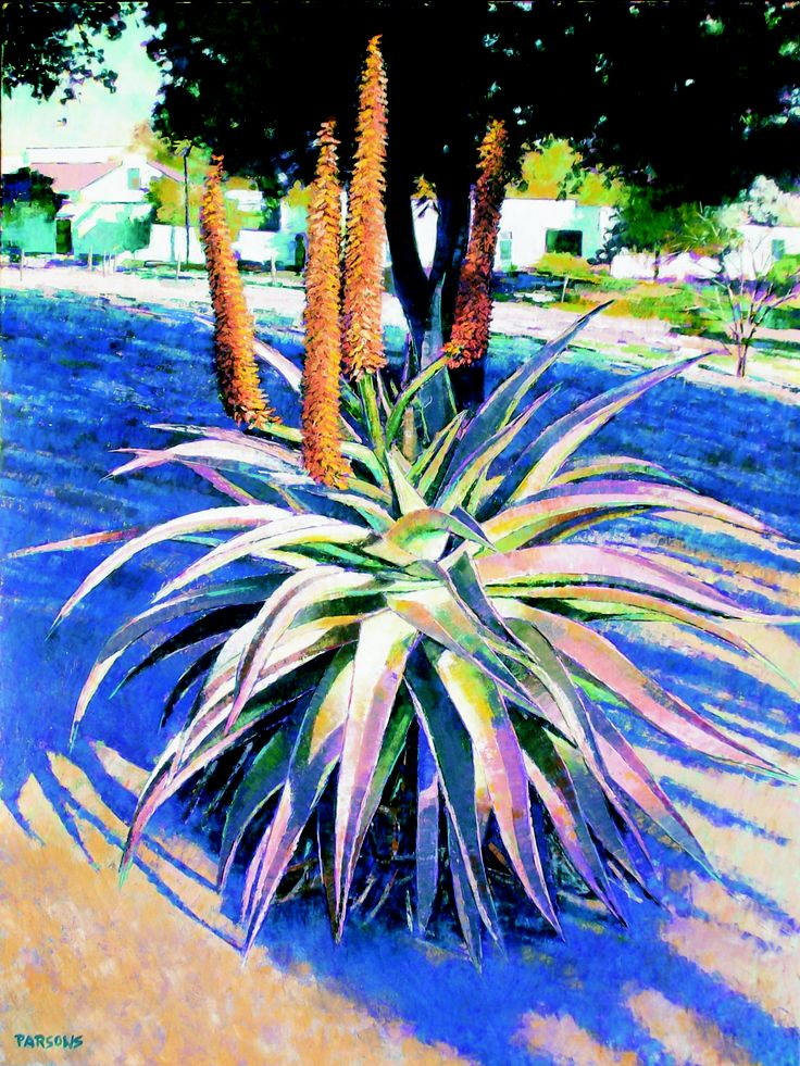 In winter we have fantastic displays of various aloe species. They are so colourful and beautiful I can't resist painting them (SOLD)