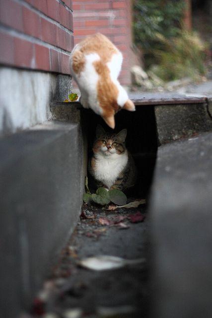 #TheGardeningMagazine.com.au  「元気?」 / Visitor   Flickr - Photo Sharing!