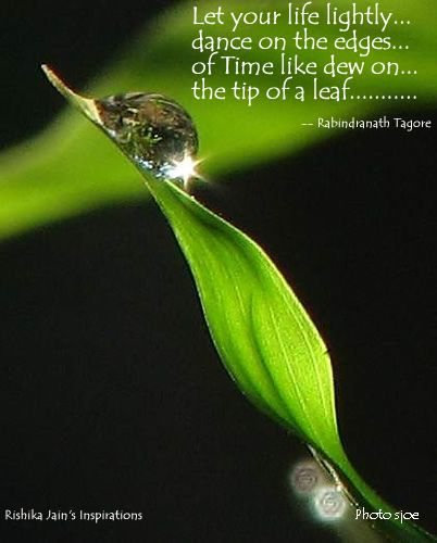 Quotes About Dew Drops Dew Drop How To Paint Quotes Life Quotes
