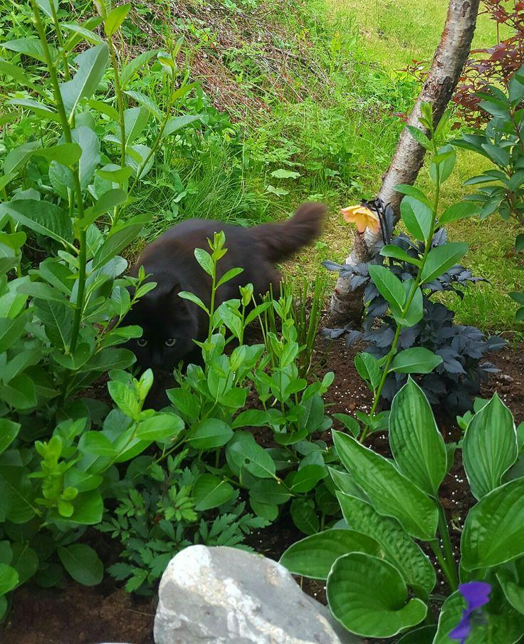 Garden cat, Kali