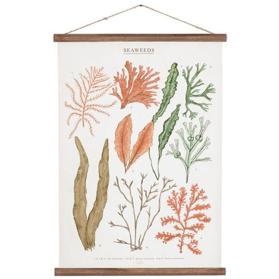 Seaweeds Poster  Handmade and designed by ARMINHO Studio. Canvas printed from the 9 original watercolor drawings by ARMINHO. Supported with pine wood