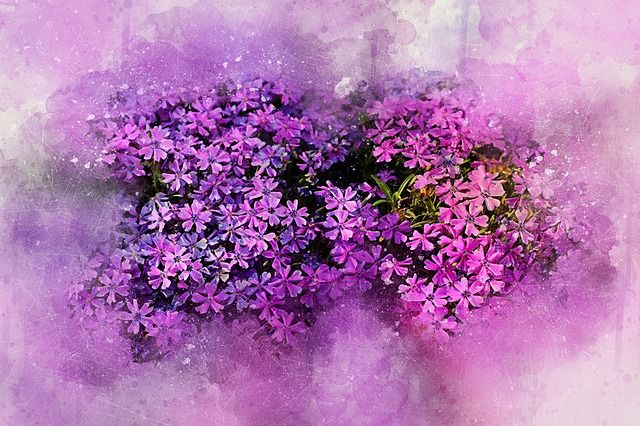 Free Image on Pixabay - Flowers, Spring, Art, Abstract