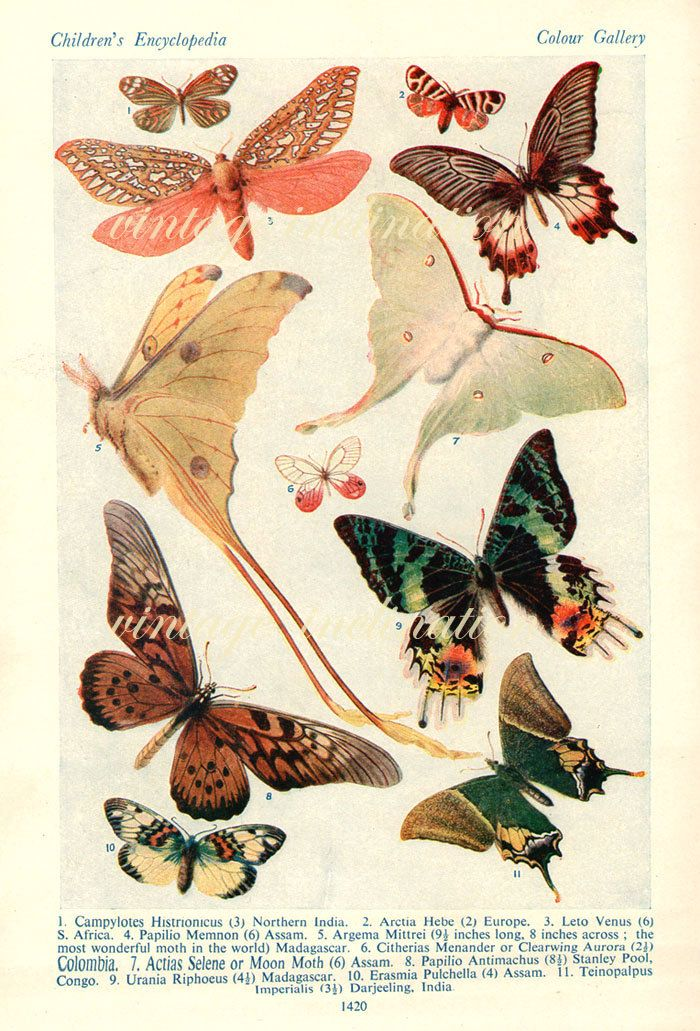1938 Butterfly Print, PLATES 1419 1420 Vintage Antique Book Plate prints, 24 butterflies insects nature art illustrations. $10.50, via Etsy.