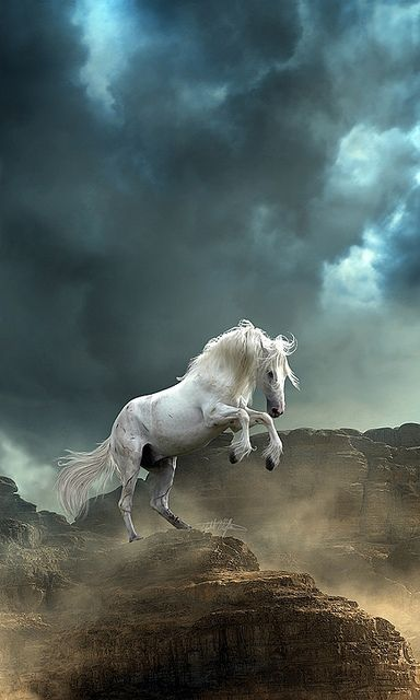 Take this quiz to find out which spirit horse is calling to you!
