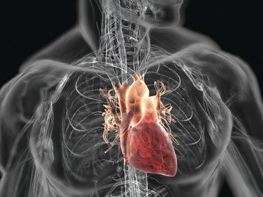 4 Silent Signs You May Have Clogged Arteries and the Best Foods to Eat to Prevent it | Health Digezt