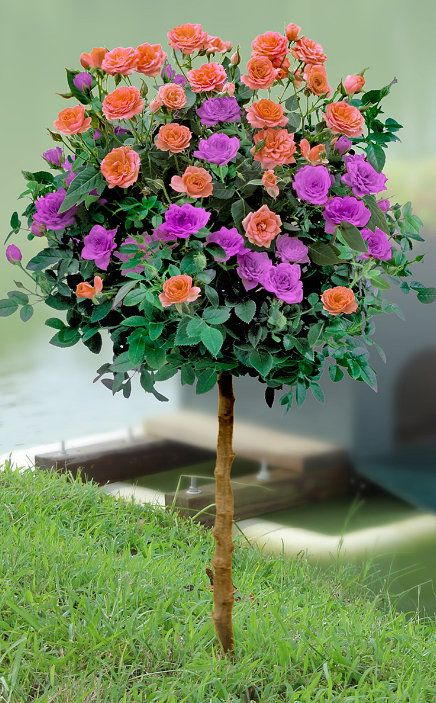 Purple Patio Chair Seat Cushions: 1000+ Images About Garden ._. On Pinterest