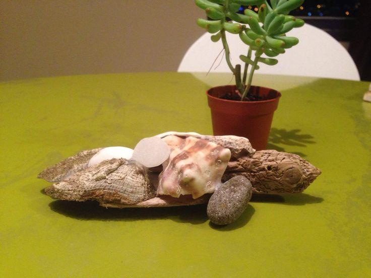 Taş, kabuk ve ağaçtan kaplumbağa...